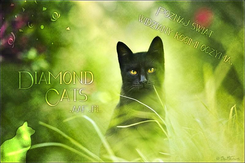 Diamond Cats Stories Strona Główna